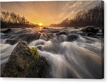 Canvas Print featuring the photograph Survivor by Davorin Mance