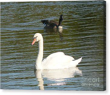 Canvas Print featuring the photograph Swan by Elizabeth Fontaine-Barr