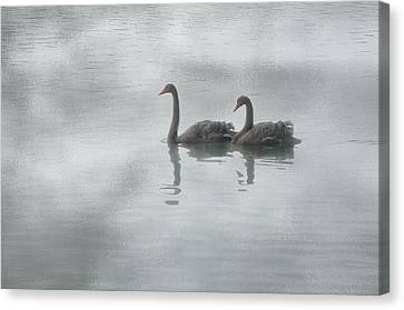 Canvas Print featuring the photograph Swan Lake by Carolyn Dalessandro