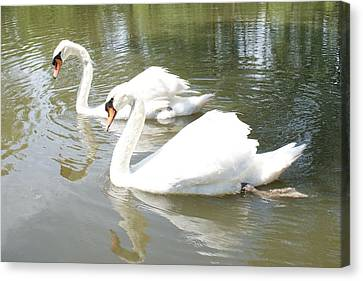 Swan Pair Canvas Print by Geralyn Palmer