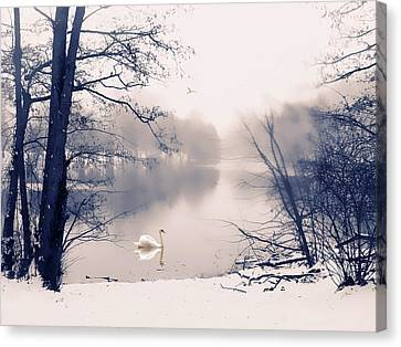 Swans... Canvas Print - Swan Song  by Jessica Jenney
