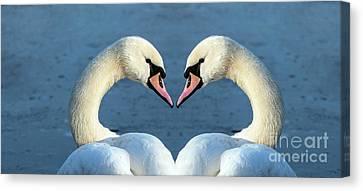 Swans Portrait Canvas Print