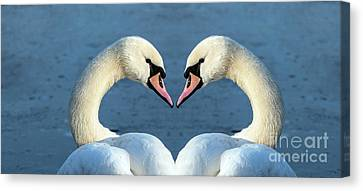 Swans Portrait Canvas Print by Odon Czintos