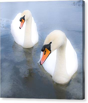 Swans Canvas Print by Svetlana Sewell