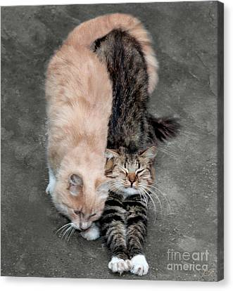 Sweet Couple Canvas Print by Sergey Lukashin
