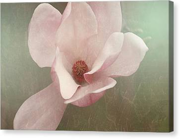Sweetbay Magnolia Bloom Canvas Print by Toni Hopper