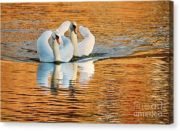 Canvas Print featuring the photograph Swimming On Gold by Darren Fisher