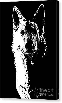 Swiss Canvas Print - Swiss Shepherd by Jana Behr