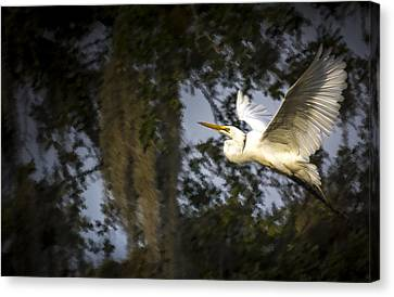 Take Flight Canvas Print by Marvin Spates