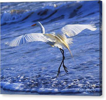 Taking Off Canvas Print