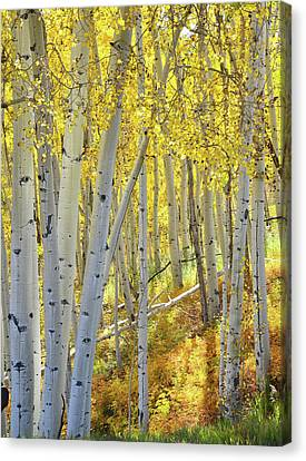 Canvas Print featuring the photograph Telluride Aspens by Ray Mathis