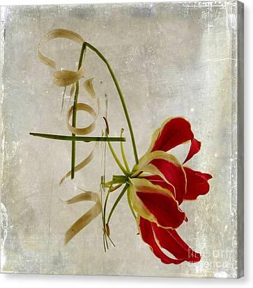Flowering Canvas Print - textured Gloriosa Lily. by Bernard Jaubert