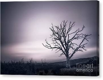 The Awakening Canvas Print