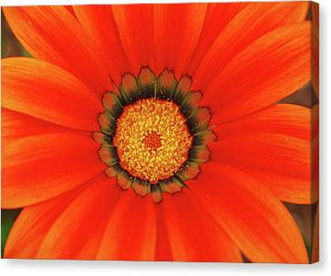 The Beauty Of Orange Canvas Print