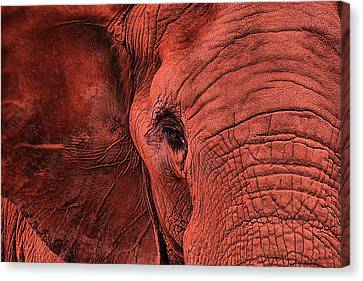 The Crimson Tide Canvas Print