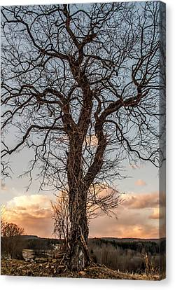 The End Of Another Day Canvas Print by Wayne King