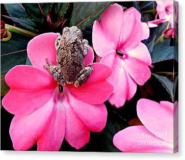 The Frog And The Flower Canvas Print