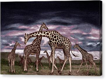 The Herd Canvas Print by Peter Piatt