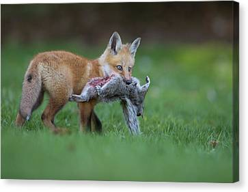 The Little Hunter Canvas Print by Mircea Costina Photography