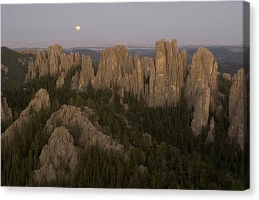 The Needles Protrude From Forests Canvas Print by Phil Schermeister