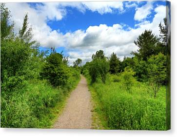 Canvas Print featuring the photograph The Path Ahead by Anthony Rego