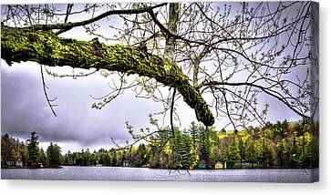 The Pond In Old Forge Canvas Print by David Patterson
