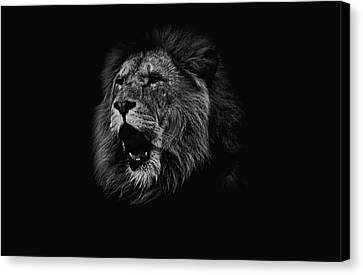 The Roaring Lion Canvas Print by Martin Newman
