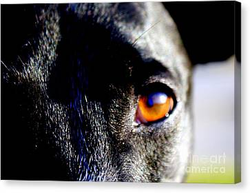 Rescued Greyhound Canvas Print - The Saint by Jennifer  Diaz