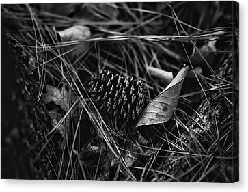 The Scent Of Pine Canvas Print by Nancy Mathia