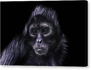 The Stare Canvas Print by Martin Newman