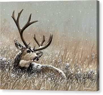 The Veteran Canvas Print