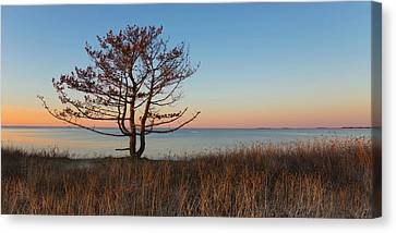 Canvas Print featuring the photograph The View by Robin-Lee Vieira