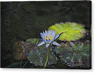 The Water Lily Canvas Print by Cendrine Marrouat
