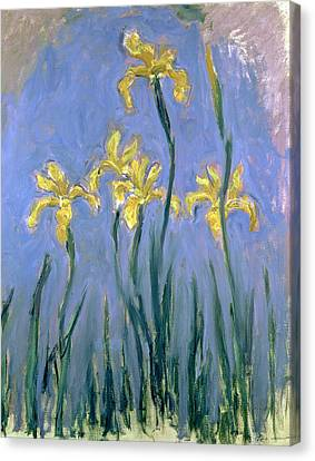 Daffodils Canvas Print - The Yellow Irises by Claude Monet