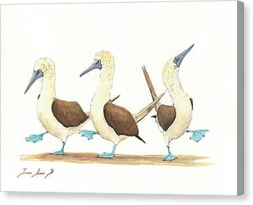 Three Blue Footed Boobies Canvas Print by Juan Bosco