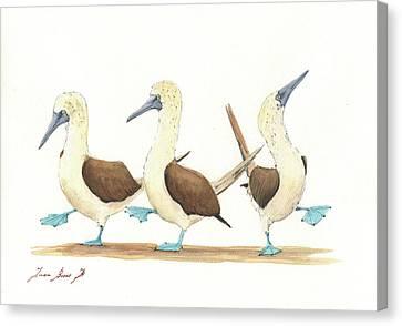 Three Blue Footed Boobies Canvas Print by Juan Bosco