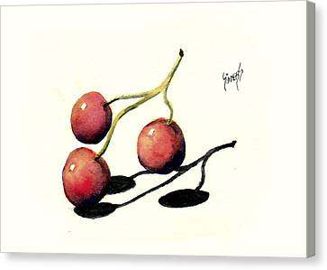 Three Cherries Canvas Print by Sam Sidders