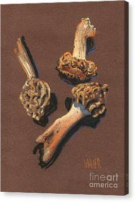 Morel Canvas Print - Three Morels by Donald Maier