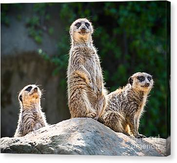 Three's Company Canvas Print by Jamie Pham