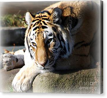 Canvas Print featuring the photograph Tiger At Cleveland Zoo by Lila Fisher-Wenzel