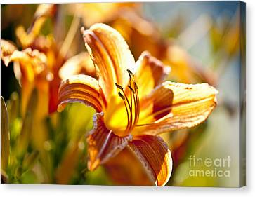 Tiger Lily Flower Canvas Print