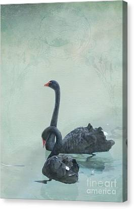 Black Swans Canvas Print by Cindy Garber Iverson