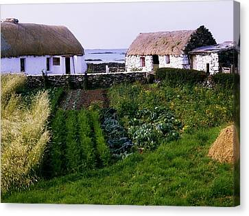 Traditional Cottages, Co Galway, Ireland Canvas Print by The Irish Image Collection