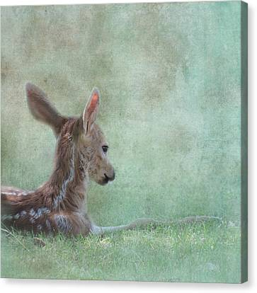 Canvas Print featuring the photograph Tranquil by Sally Banfill