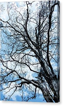 Brunch Canvas Print - Tree Branches by Svetlana Sewell