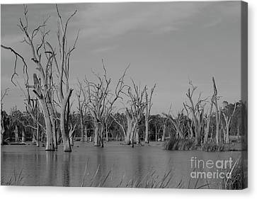 Canvas Print featuring the photograph Tree Cemetery by Douglas Barnard