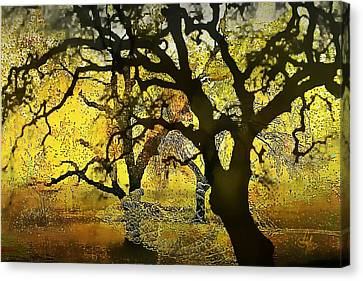 Tree Deconstructed 5 Canvas Print by Lynda Payton