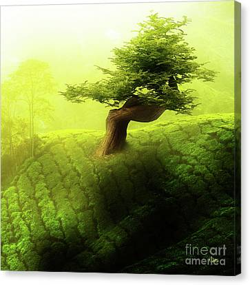 Canvas Print featuring the photograph Tree Of Life by Mo T