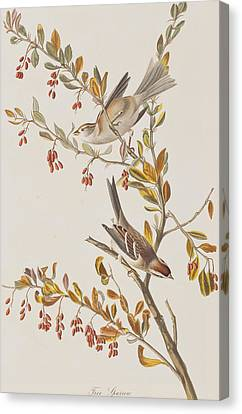 Tree Sparrow Canvas Print by John James Audubon