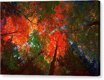 Tree Tops Canvas Print by David Stasiak